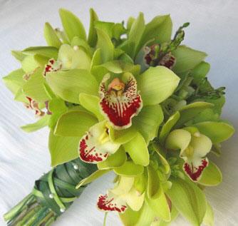 greenorchids